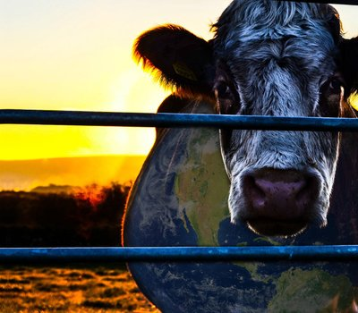 Cowspiracy: The Sustainability Secret online