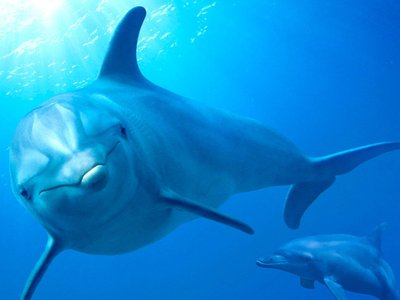 watch Dolphin Reef streaming