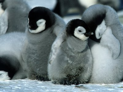 watch March of the Penguins streaming