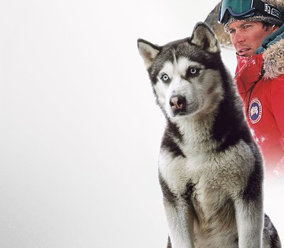 Eight Below online