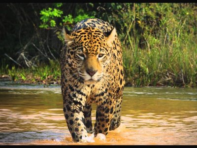 watch Colombia: Wild Magic streaming