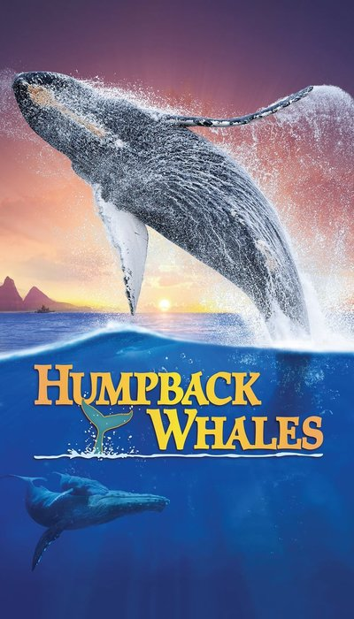 Humpback Whales movie