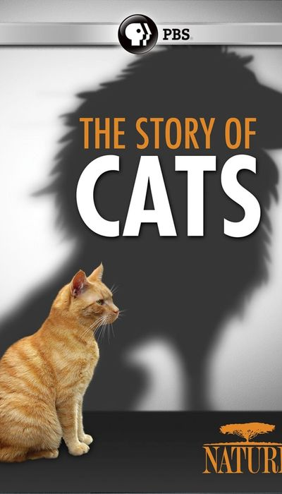 The Story of Cats movie